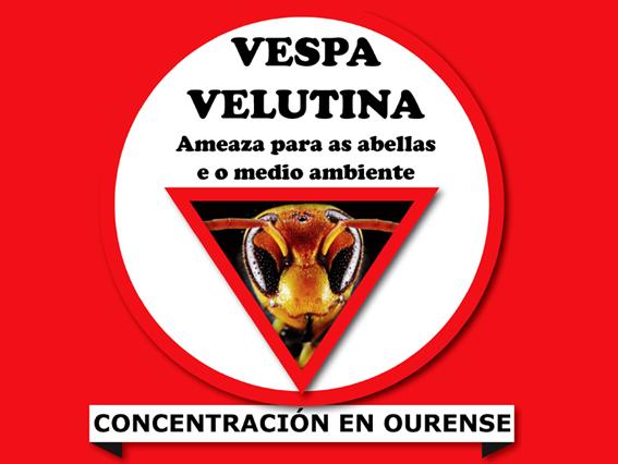Manifestación velutina Ourense
