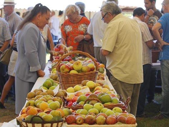 Concurso froita