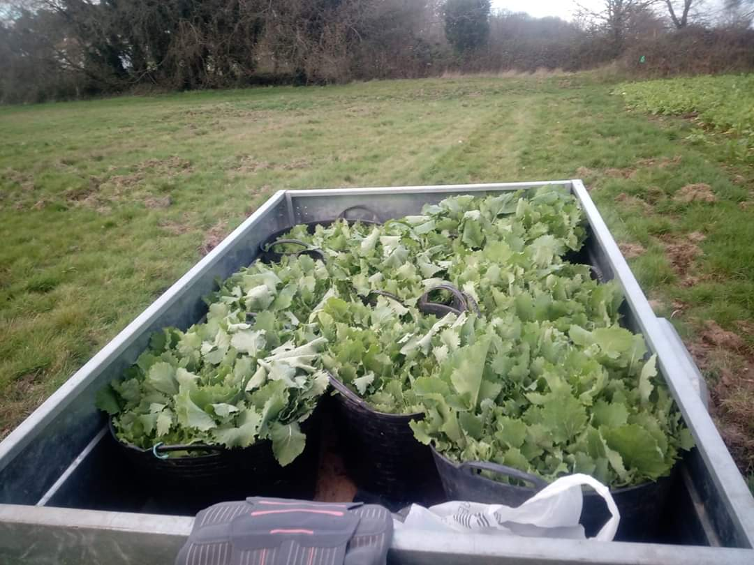 verduras apañadas na horta- Cartelle